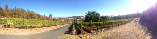 DANCIN Vineyard Medford Oregon Pano